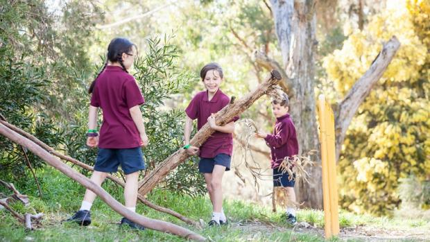 Three primary school children at school playing with tree branches with tall gum trees in the background