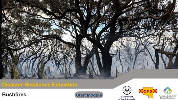 Disaster resilience education resource by CFS showing big dark spreading tree branches